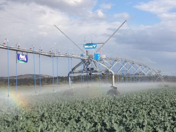 New Valley pivot gets its first run through a crop of broccoli