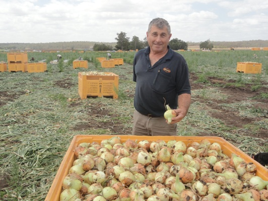 Qualipac Director, Russell Qualischefski and some onions from the first week of harvest in the Lockyer Valley.