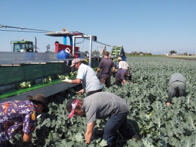 Harvesting 2015.1