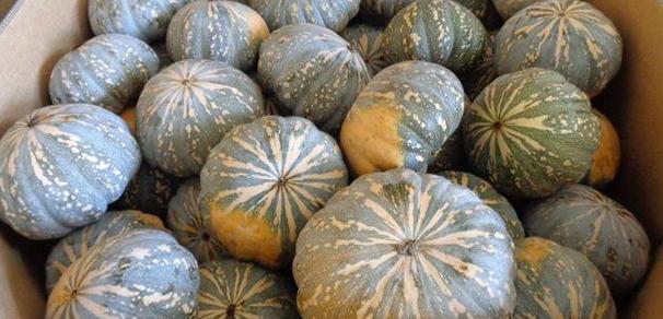Kent Pumpkins Packed